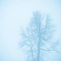 Blue Fog by Cheryl Baxter