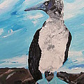 Blue Footed Booby by Susan Voidets