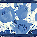 Blue For You Roses by Belinda Lee