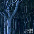 Blue Forest by Heiko Koehrer-Wagner