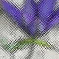 Blue Glass Flower by Ben and Raisa Gertsberg