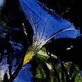 Blue Glory by Joe Arsenian