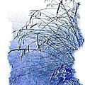 Blue Grass by Will Borden