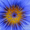 Blue Heart by Ben Yassa