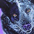 Blue Heeler by Deborah Cullen
