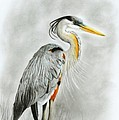 Blue Heron 3 by Phyllis Howard