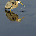 Blue Heron   #7783 by J L Woody Wooden