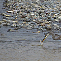 Blue Heron And Fish   #9619 by J L Woody Wooden