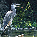 Blue Heron by Christopher Lyter