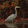 Blue Heron In The Fall by Raymond Salani III