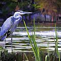 Blue Heron On The Bay by Elaine Plesser