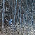 Blue Heron by Pat Thomson