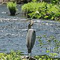 Blue Heron River Fishing  by Neal Eslinger