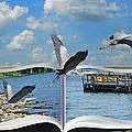 Blue Heron Storybook by Steven Michael