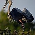 Blue Heron Wing Tips by Patricia Twardzik