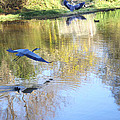 Blue Herons On Golden Pond by Diana Haronis