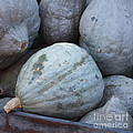 Blue Hubbard Squash by Art Block Collections
