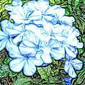 Blue Hydrangea by April Patterson