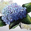 Blue Hydrangea by Karin  Dawn Kelshall- Best