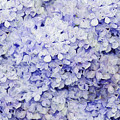 Blue Hydrangea Painterly by Andee Design