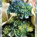 Blue Hydrangeas Painterly by Andee Design