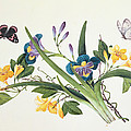 Blue Iris And Insects by Chinese School