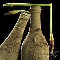 Blue Iris And Old Bottles by Bernard Jaubert