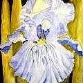 Blue Iris by Carol Grimes