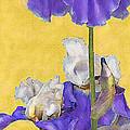 Blue Iris On Gold by Jane Schnetlage