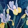 Blue Iris by Philip Fleischer