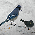 Blue Jay And Junco by Ericamaxine Price