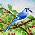 Blue Jay by Anjali Vaidya
