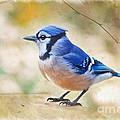 Blue Jay - Digtial Paint by Debbie Portwood