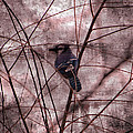 Blue Jay In The Willow by Ericamaxine Price