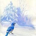 Blue Jay In Winter by Janette Boyd