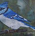 Blue Jay by Jana Baker