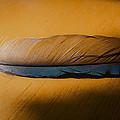 Blue Jay Way by David Stone