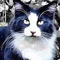 Blue Kitty Two by Alice Gipson