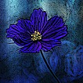 Blue Lady by Barbara S Nickerson