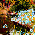 Blue Lily Water Garden by Amy Vangsgard