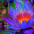 Blue Lotus by Fli Art