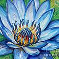 Blue Lotus by Natalie Huggins