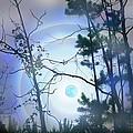 Blue Moonlight by Nina Fosdick