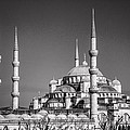 Blue Mosque Black And White by For Ninety One Days