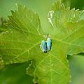 Blue On Green by Fraida Gutovich