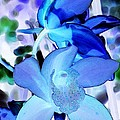 Blue Orchids by Kathleen Struckle