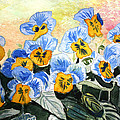 Blue Pansy by Donna Walsh
