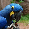 Parrot by FL collection