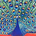 Blue Peacock by Jasna Gopic
