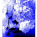 Blue Peony by Tina Meador